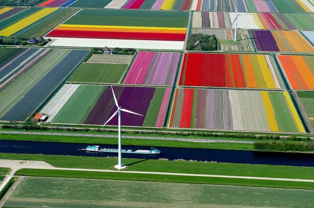 Champs de tulipes vue du ciel